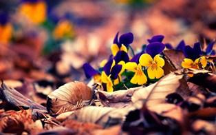 973-autumn_leaves_flowers.jpg (314×196)