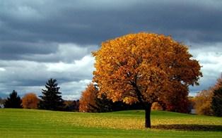 969-autumn_tree_background.jpg (314×196)