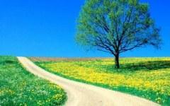 839-spring_road.jpg (240×150)