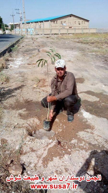 درختکاری منطقه زمین شهری توسط چندتن از دوستداران شوش