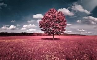 966-landscape_art.jpg (314×196)