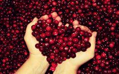 434-cranberries.jpg (240×150)