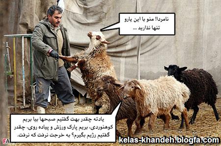 عکس خنده دار عید قربان 94