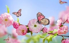 408-butterfly-29a.jpg (240×150)