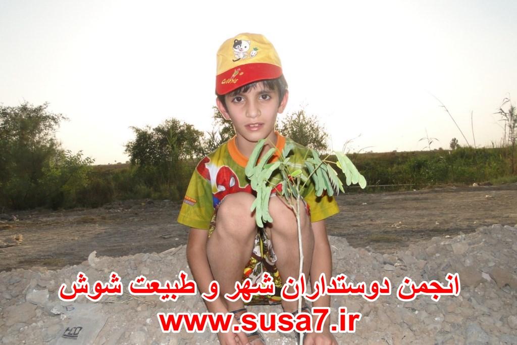 درخت کاری منطقه 10 اطراف رودخانه شاوور 1393/03/04