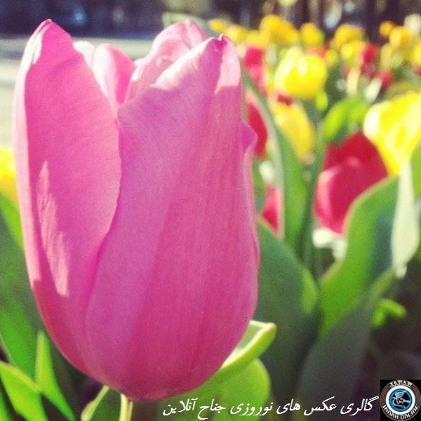 عکس های ارسالی،ویژه ی مسابقه ی عکاسی نوروزی جناح آنلاین(سری۷)