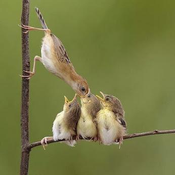 صحنه کمیابی از طبیعت پرندگان