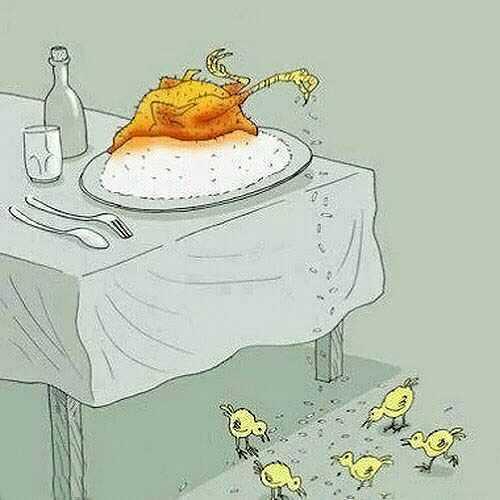 عکس جالب برنج دادن مرغ بریان شده به جوجه هایش