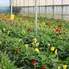 طرح توجیهی تولید و پرورش گل رز در گلخانه های هیدروپونیک