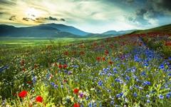 176-Landscape.jpg (240×150)