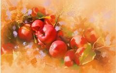 163-apples branch foliage.jpg (240×150)