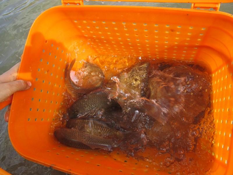 [تصویر:  khemiranfishing%20%282%29.jpg]