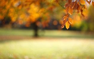 976-blurred_autumn.jpg (314×196)