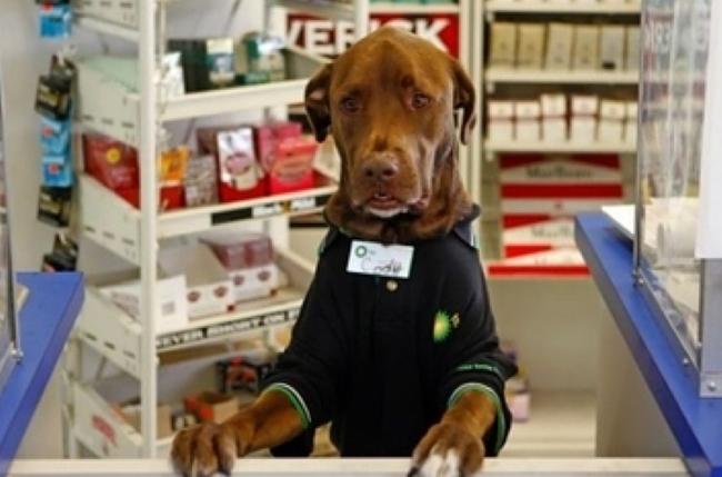 سگ های آموزش دیده که کار انسان را انجام می دهند