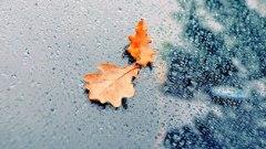 895-Rain Glass.jpg (240×135)