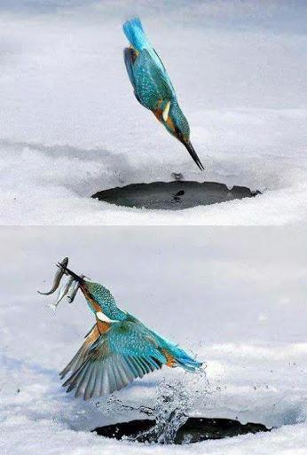 تصویر صحنه شکار پرنده در ابهای منجمد